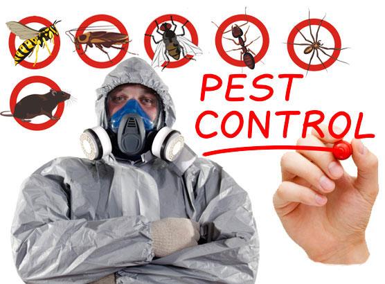 Pest Control Services Company Dhaka Bangladesh